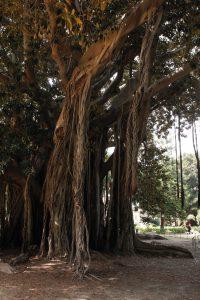 treeparc